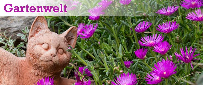 Gartenwelt (Katze, lila Blüten)