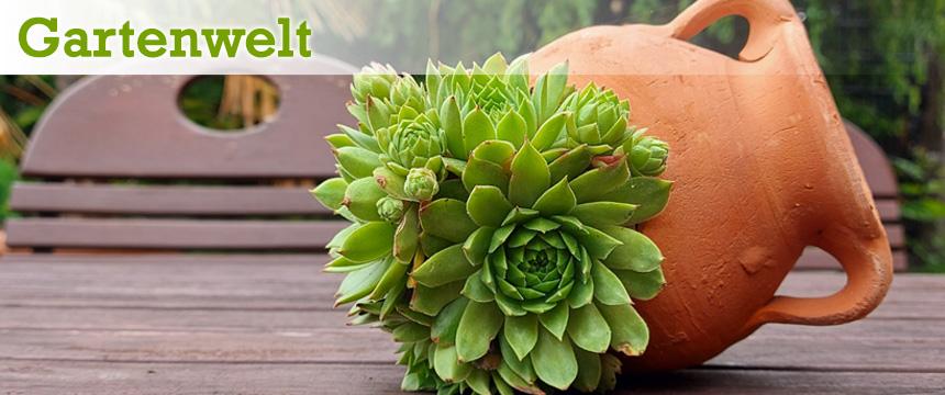 Gartenwelt kleine Amphore