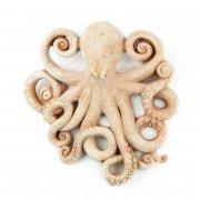 Gartendeko Wandbild Krake Tintenfisch Octopus - Terracotta in Impruneta Qualität aus Italien